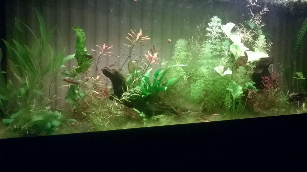 Mes aquariums d'Amérique Wp_20160422_20_56_15_pro-4f499a3