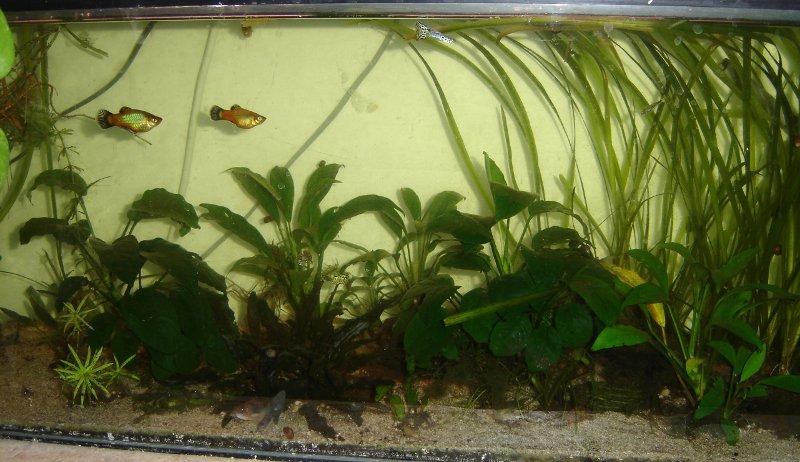 les aquariums de Tritium - Page 2 100l-509240a