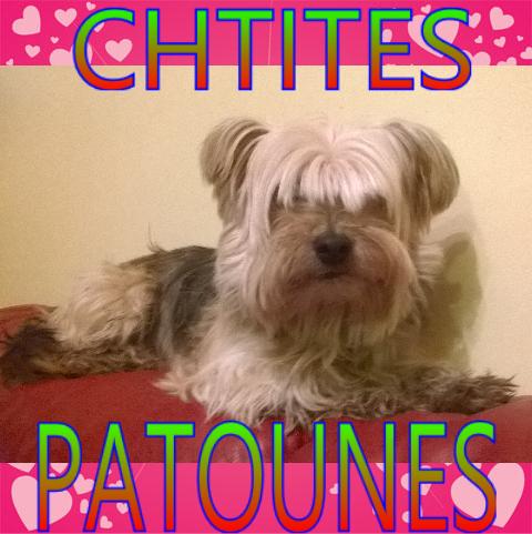 chtites patoune Index du Forum