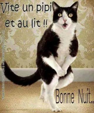 Bonjour / Bonsoir d' AOUT - Page 5 Dfd2df56829755e1f...oto-chat-52f0bf3