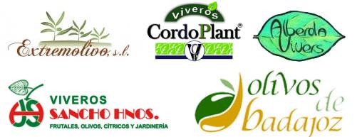 Viveros de olivo, comprar planta de olivo, comprar olivos, plantones, productores de planta de olivo, venta de olivos