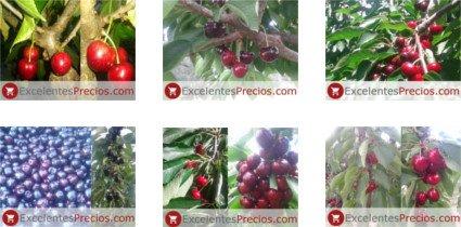 Cereza: fruta, planta, clase, propiedades...