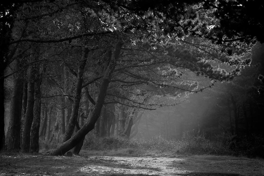 Lumière sylvestre _dsc7001-5460c68