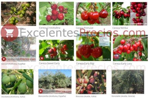 variedades de aceituna (Gordal, Manzanilla, Verdial, Picholine, Hojiblanca...) y cereza (Cristalina, primulat, Nimba...)