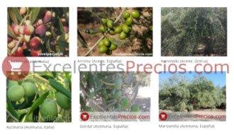 Diferentes Clases de Olivo (Picual, Hojiblanca, Cornicabra, Empeltre, Verdial, Pajarero...)