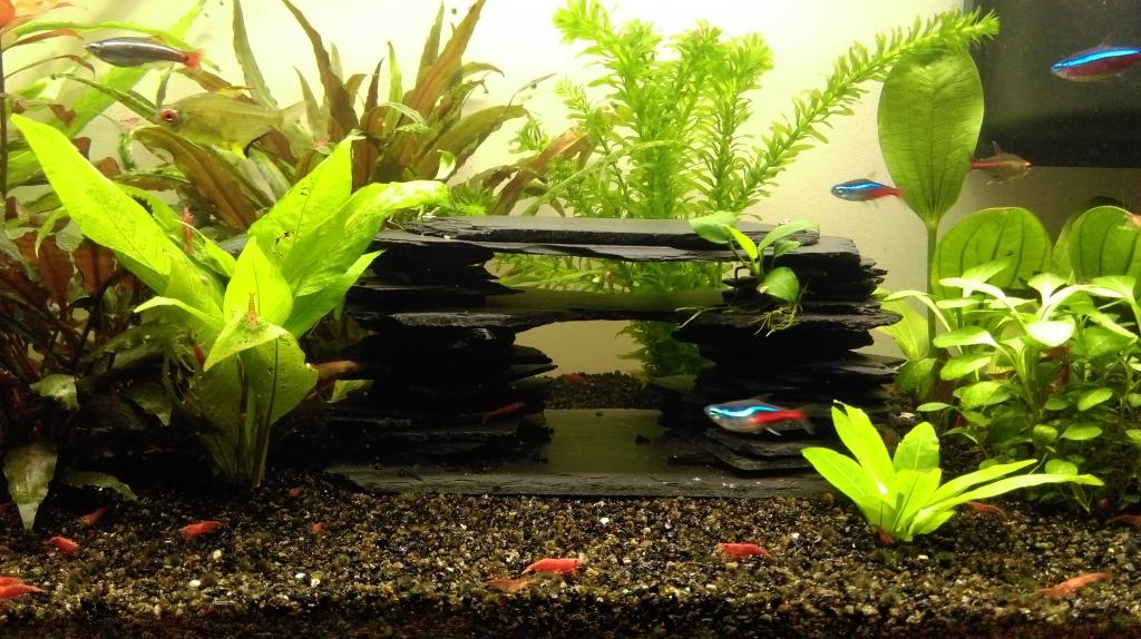 Mon nouveau aquarium Imag0035-min-4da33b5
