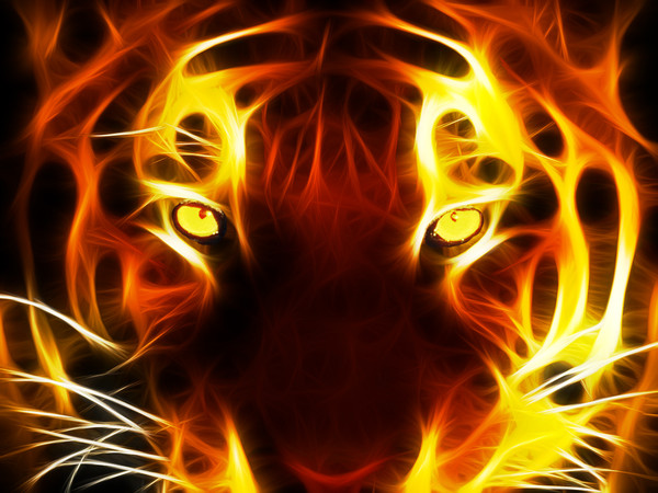 Alliance Tigers Index du Forum