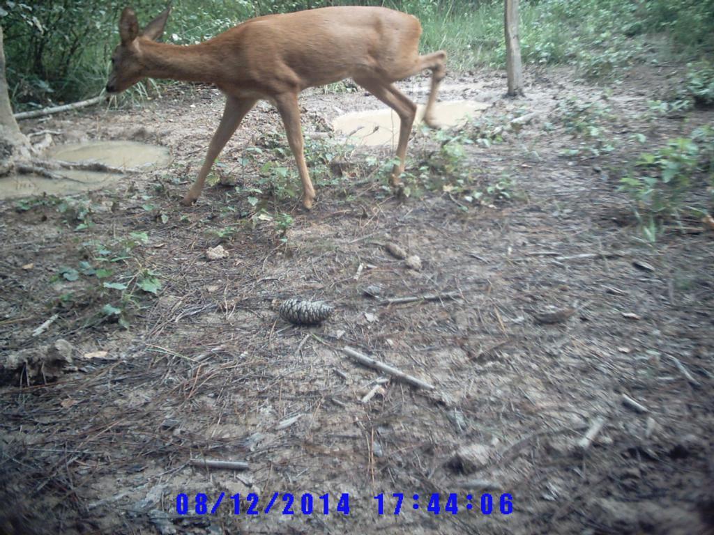 photos camera Sunp0104-495af25
