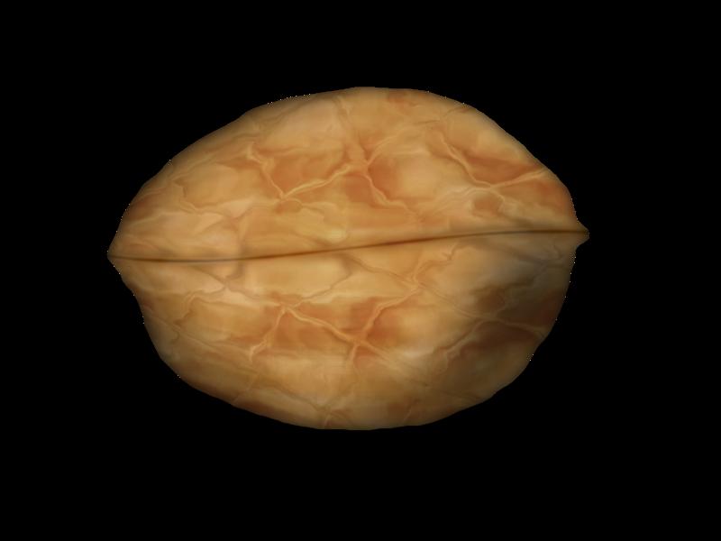 wallnut-final-2-517c151.png