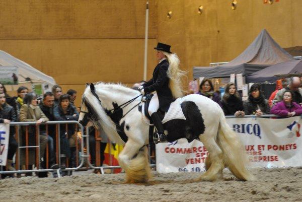 Quint de tof du jeudi 31 mars fontainebleau prix - Salon du cheval a mons ...