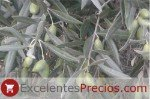 Cornicabra es una aceituna de alto rendimiento y se utiliza principalmente en la producción de aceite de oliva
