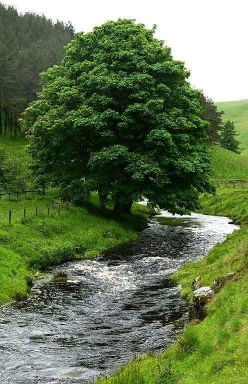 La Belleza De Nuestros Bosques.  16---1-51fc061
