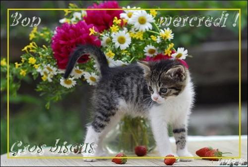 Mars bon ou méchant: ton boeuf à l'herbe, ton chien dedans - Page 17 13---chat---mercredi-4ed854f