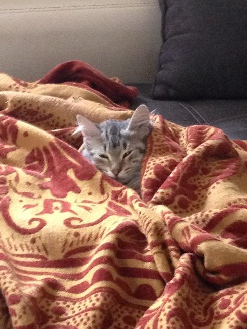 j ' adore mon chat !!! Img_2882r-4817b66