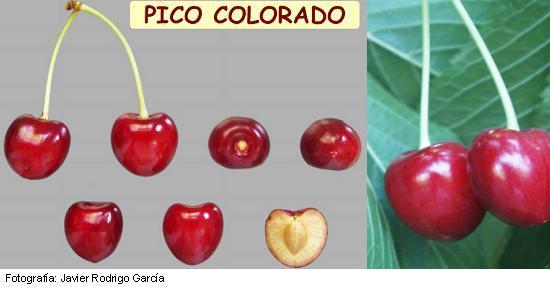 Variedad Pico Colorado, Picota del Jerte, Cereza Picota, maduración muy tardía