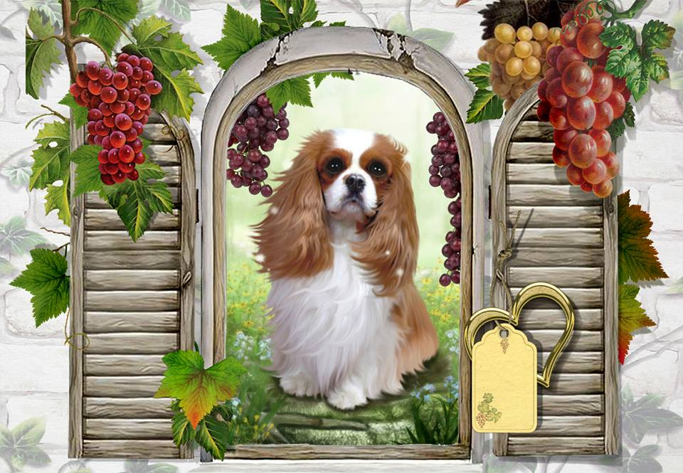 Passion Cavaliers King Charles Forum Index