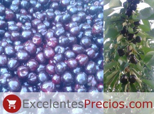 Árbol de Cereza Black Star, cereza color negro, resistente al agrietado