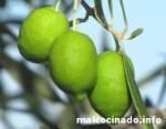 Variedad de olivo Pico Limón