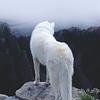 Phantom ─ Humilité Glaciale Icon-5534d69