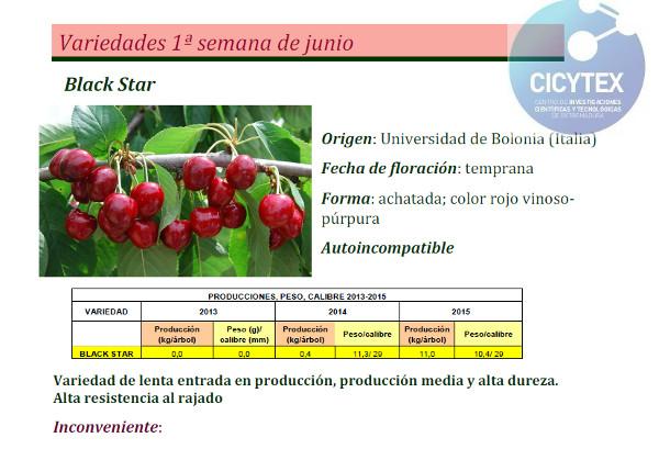 Estudio Cicytex Cerezo Black Star