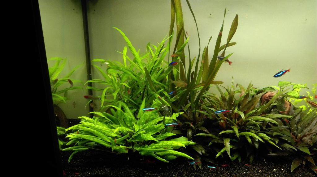 Mon nouveau aquarium Imag0020_1600x896-4d97bc4