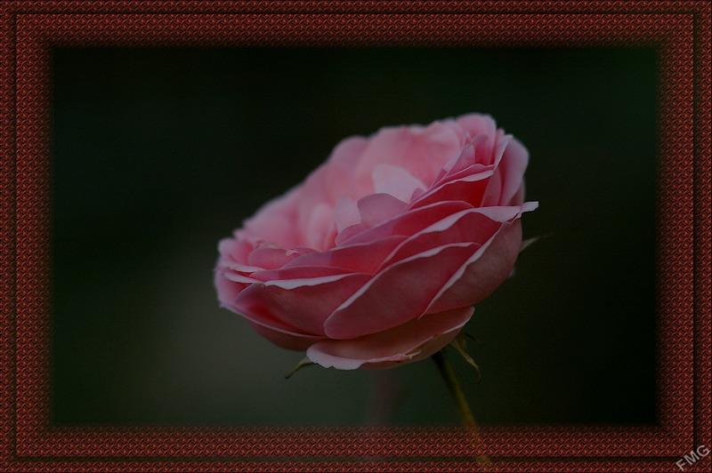 http://img110.xooimage.com/files/a/7/2/imgp5941_cc_v-534aad3.jpg