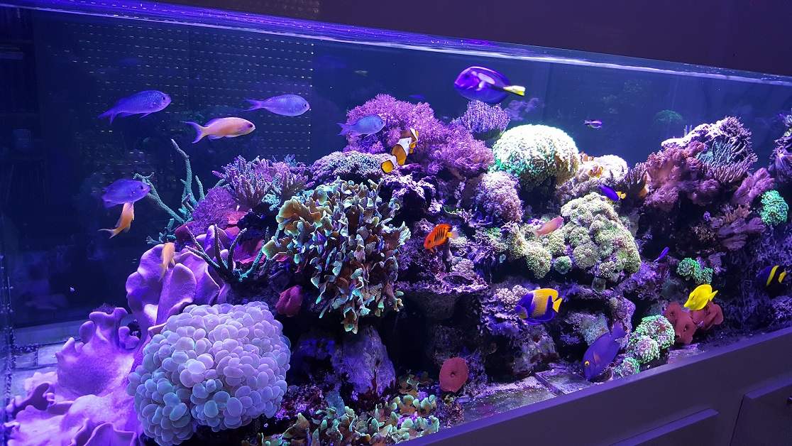 Forum r cifal finist rien afficher le sujet aquarium d for Aquarium recifal complet