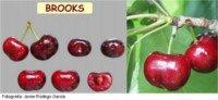 Tipos de cereza: Brooks