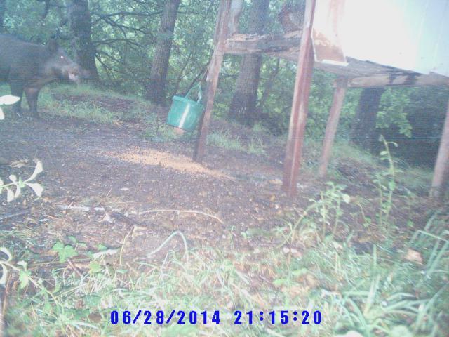 photos camera Bis-495ae81