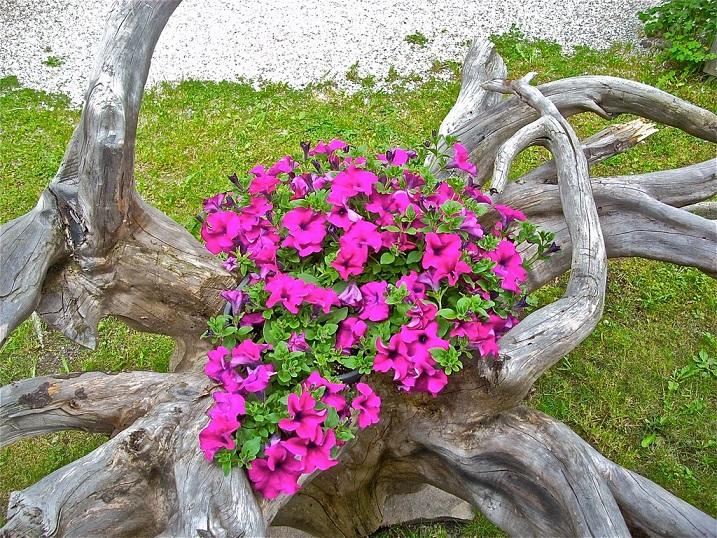 Il concorso del salottino di marzo 2015 fiori e piante di - Giardini di montagna ...