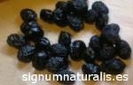 Variedad de Olivo Negral de Sabiñan
