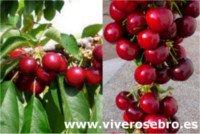 Tipos de cereza: Nimba