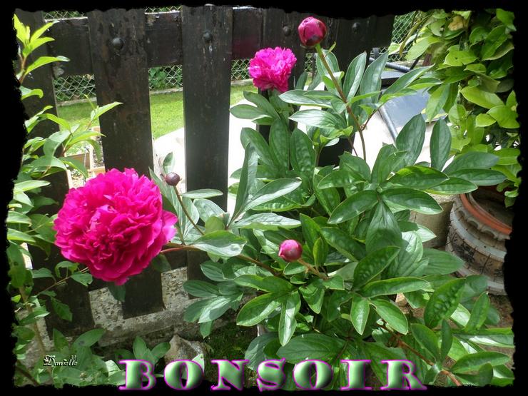 Bonne soirée du jeudi 04 Juin Pivoire-03-luin-2015-4b83293
