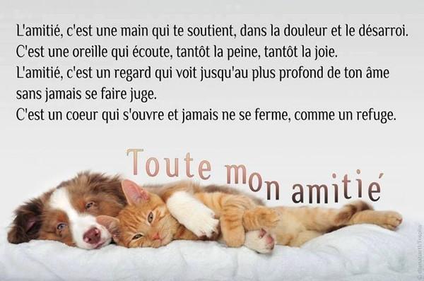 citation image L-amiti-c-est-tout-cela-4d3a058