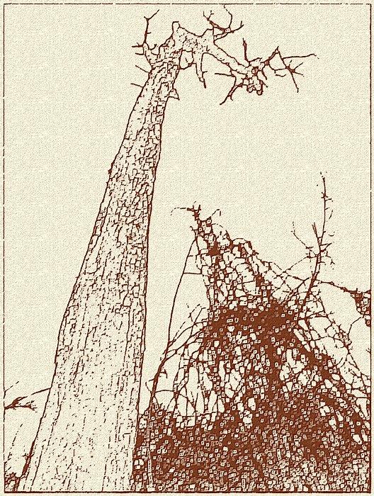 Un arbre mort _f34981a503_b_estampe_v-4e859cd