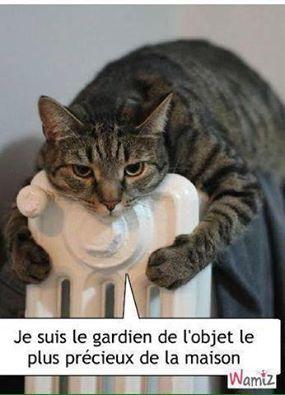 Chats alors !!! Ob_4a8dca_chat-humour-1-55ef504