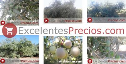 variedades de aceituna, tipos de olivo, nombres de aceitunas, clases de olivo