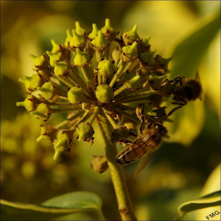 botanique compagnie page 1077 photos photo num rique forum. Black Bedroom Furniture Sets. Home Design Ideas