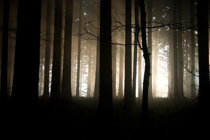 bois vol la nuit - photo #35