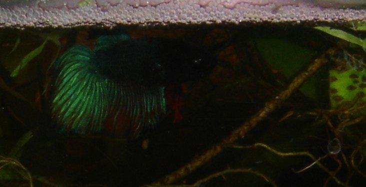 les aquariums de Tritium - Page 2 30l-50923ef