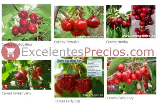 Tipos de cereza
