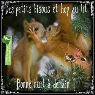 Bonjour / Bonsoir d' AOUT - Page 5 793ccf58-52eb353