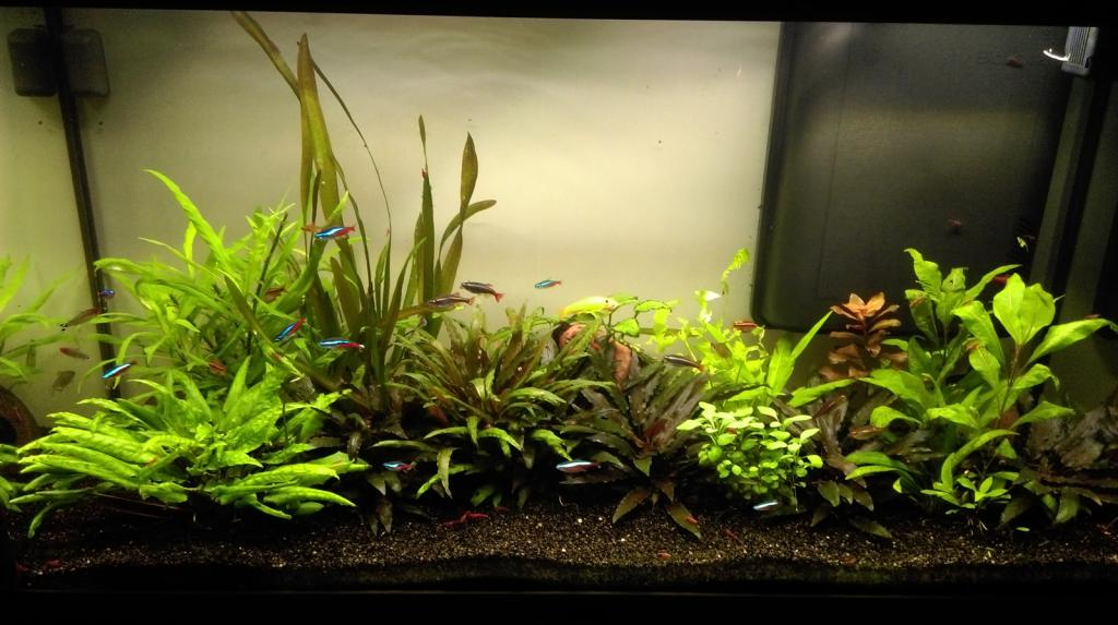Mon nouveau aquarium Imag0022_1600x896-4d97be4