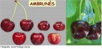 Tipos de cereza: Ambrunés