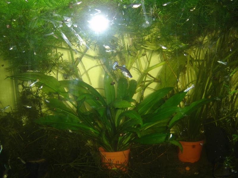 les aquariums de Tritium - Page 2 200l-5092410
