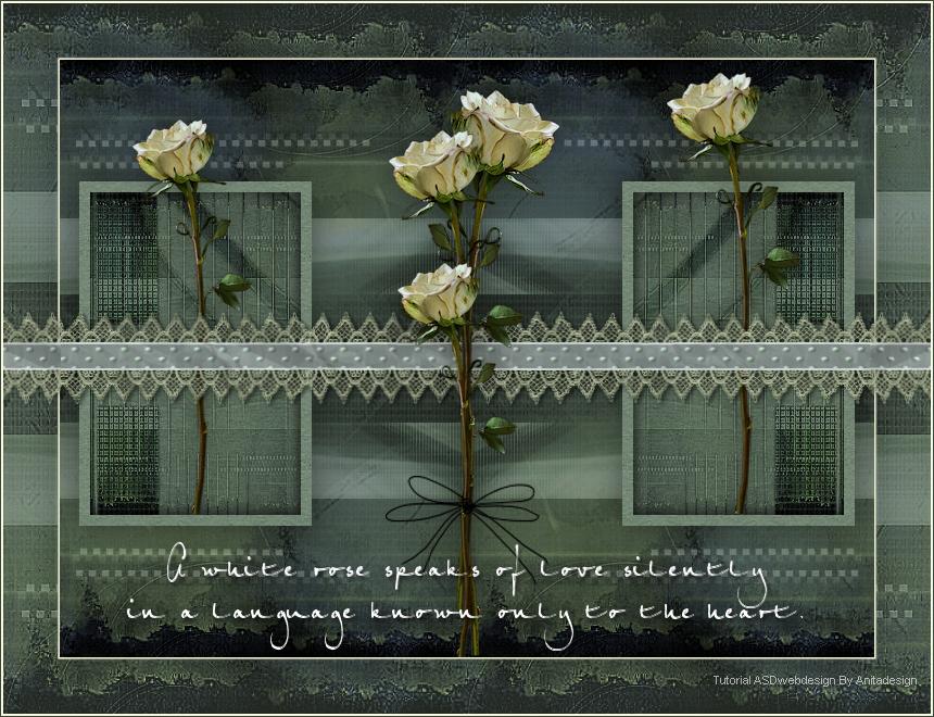 White Roses Imagen1-528eb3d