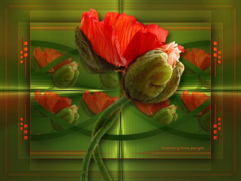 Poppies Poppies-gra-470c818