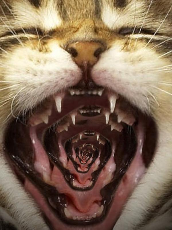 cat-drost1-4cbd258.png