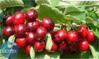 Tipos de cereza: 4-84