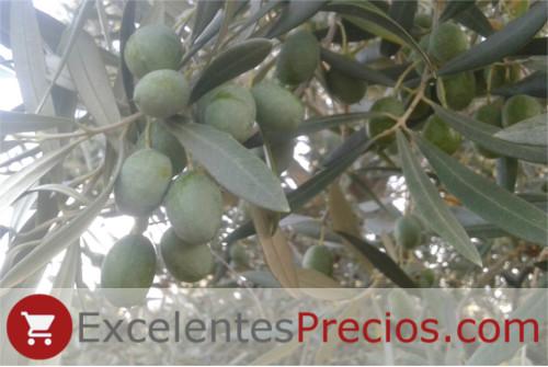 Aceituna Verdial, Verdial de Badajoz